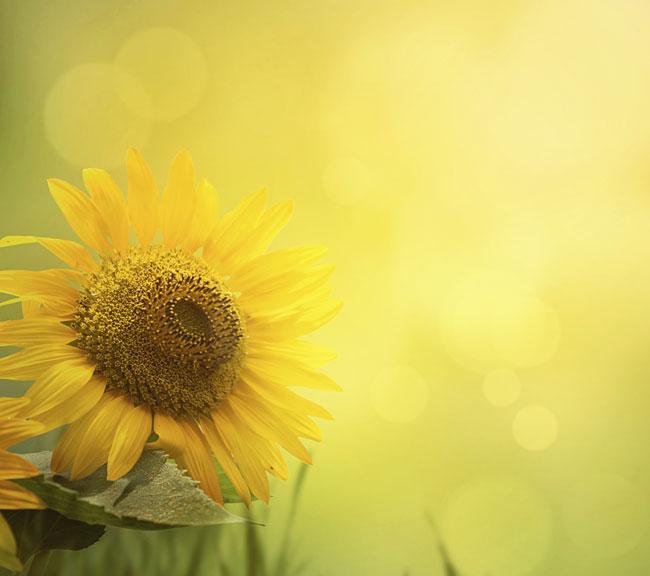 Favorito La favola del girasole che vuole scacciare il sole | Pensieri e  QC95